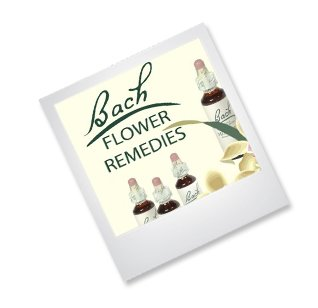 Bach Flower Remedies in Geneva — Anita Brenneke